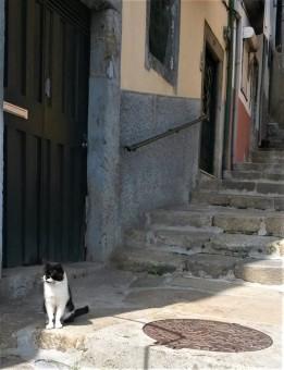 Ally cat