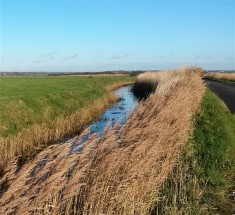 Reeds, roads and flat lands of the Pevensey levels
